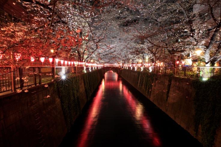 Nakameguro river tokyo cherry blossom