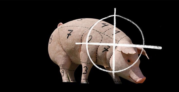 vegan werden einfach foodblog tierschutz tierrechte