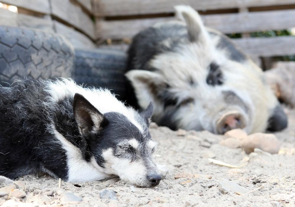 vegan werden foodblog tierrechte