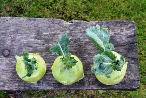 vegane kohlrabischnitzel selber machen rezept